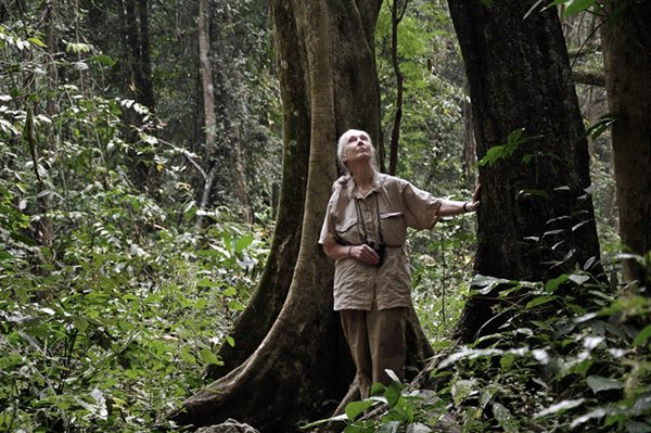Dr. Jane Goodall scans the tree tops for looking for chimpanzees in Gombe National Park on  July 14, 2010, the 50th anniversary of her arrival at Gombe.